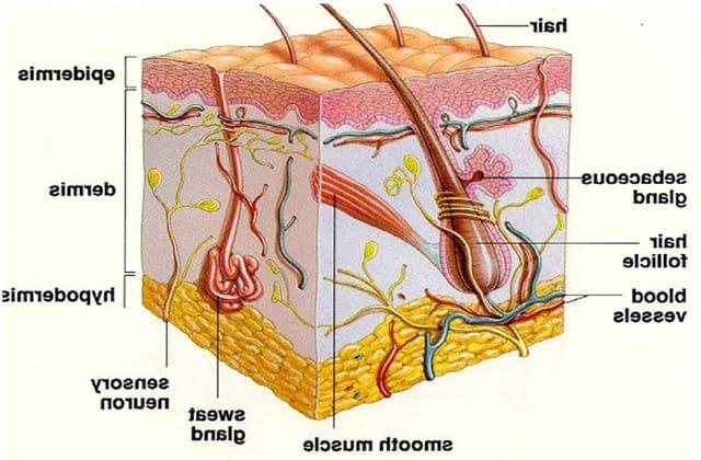 Pertumbuhan abnormal pada sel kulit menjadi penyebab munculnya jerawat batu