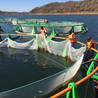 Chicoa Fish Farm - #Mozambique