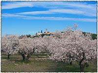 Cvjetanje badema Donji Humac slike otok Brač Online