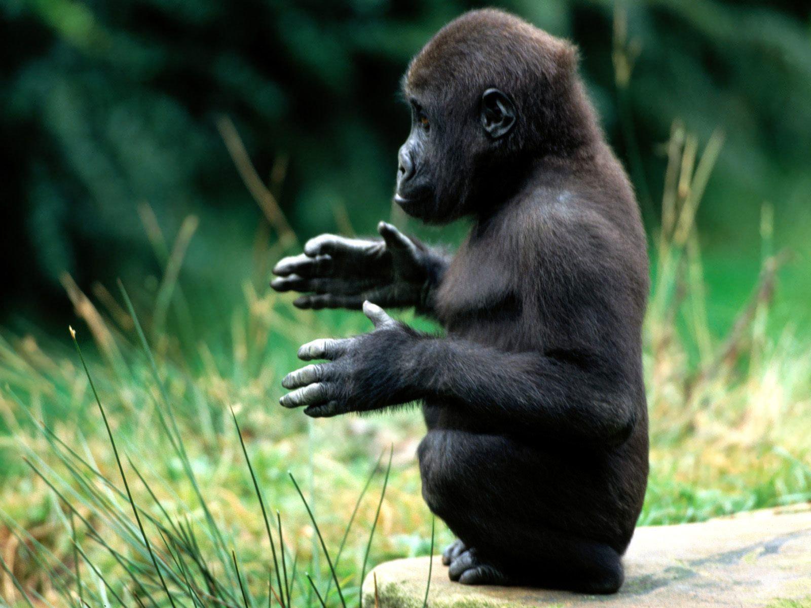 Смешные картинки с обезьянами фото с надписями, днем