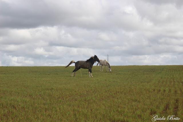 Cavalo a fazer chichi