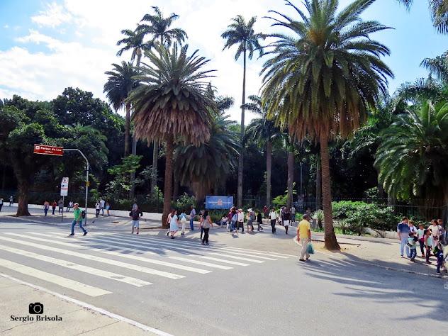 Vista da entrada principal do Parque Jardim da Luz - Luz - São Paulo