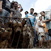 China's Dog Meat Festival Has Been Canceled