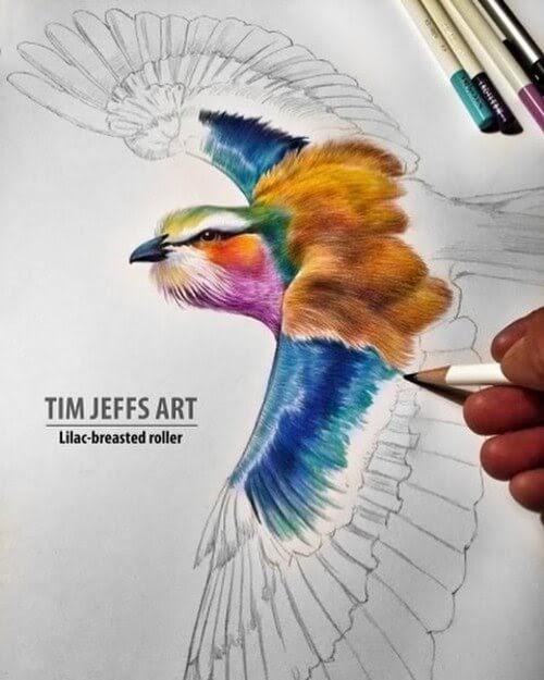 02-Lilac-Breasted-Roller-Tim-Jeffs-www-designstack-co