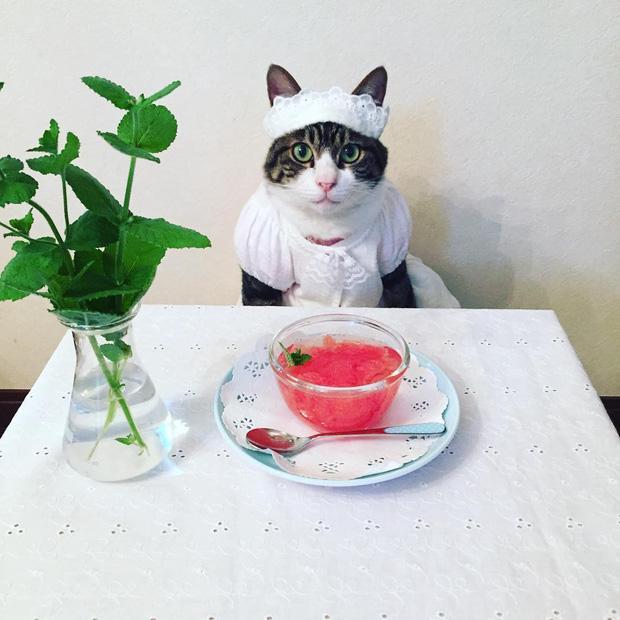 Đại sứ mèo cute đi truyền bá văn hóa Nhật Bản