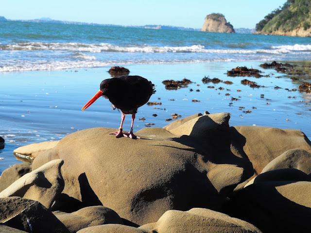 Wenderholm Nationalpark , Neuseeland