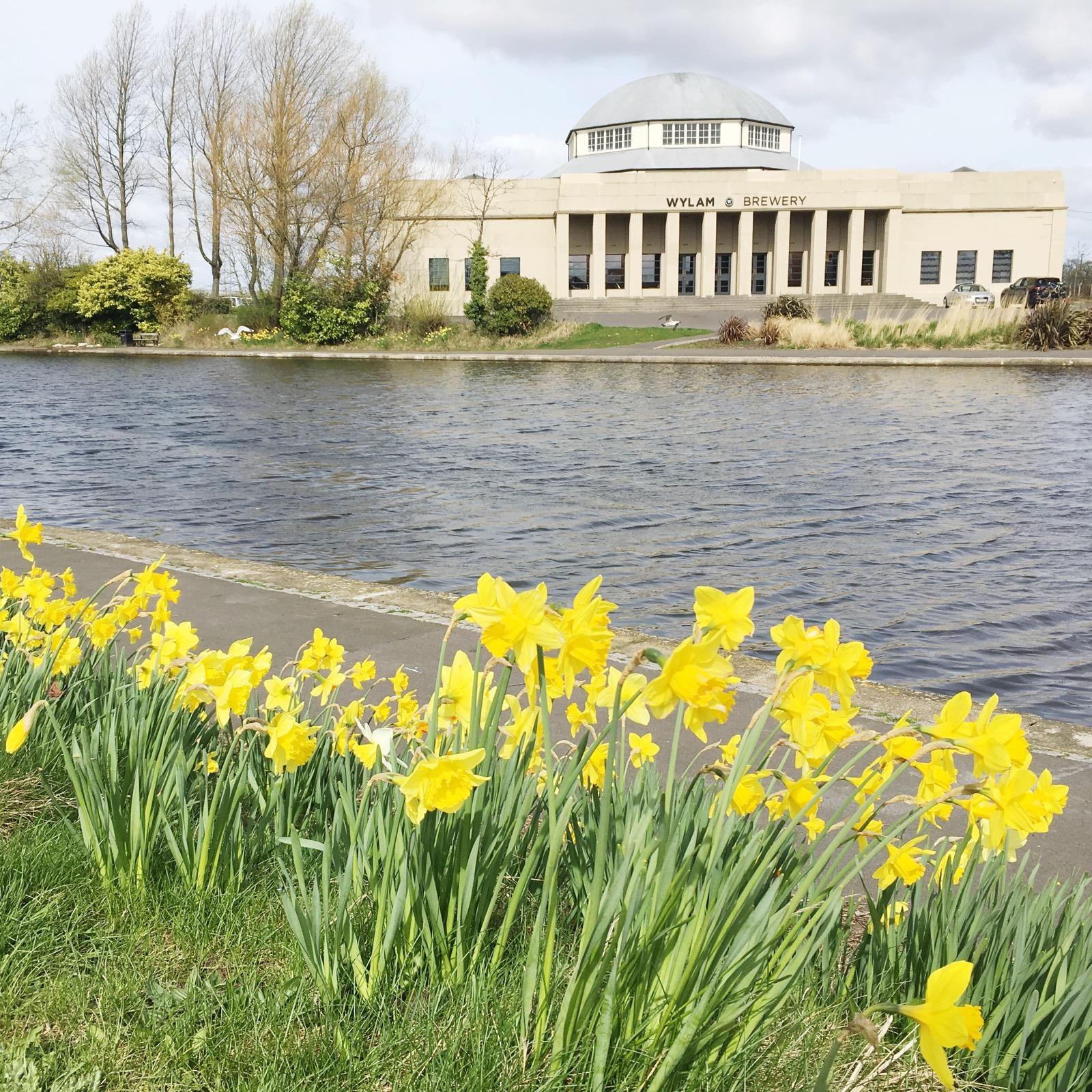 April Days - Wylam Brewery Daffodils