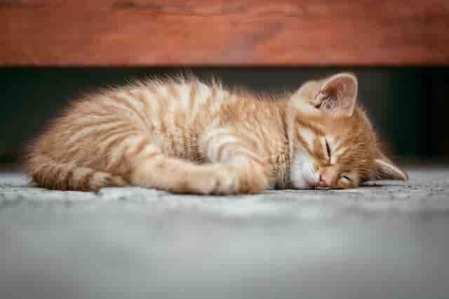 Rahat Uyumak İçin