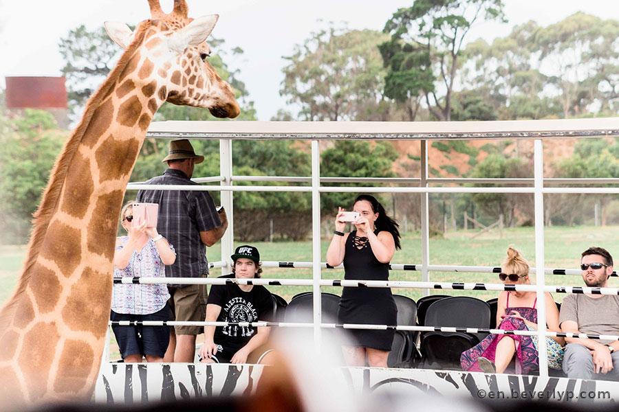visit-melbourne-werribee-zoo