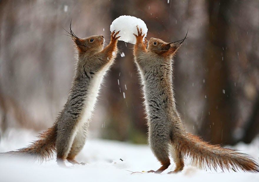 adorable squirrel photos vadim trunov-2