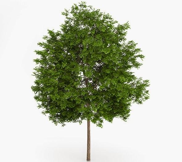 Free 3D Models of Tree
