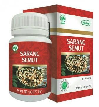 Sarang Semut HIU Papua Obat Kanker, Jantung, Tumor