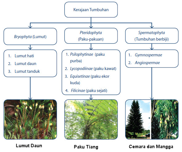 Tumbuhan merupakan salah satu dari klasifikasi makhluk hidup Kelompok Tumbuh Tumbuhan (Plantae)