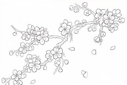 Gambar Bunga Sakura Untuk Mewarnai