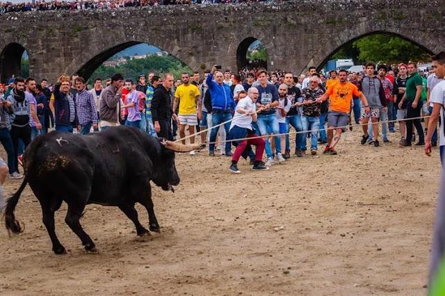 Vaca das Cordas em Ponte de Lima