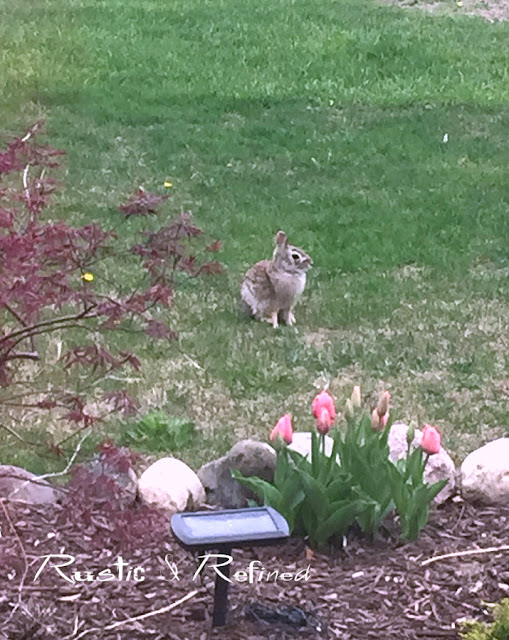 Garden predators and spring flowers