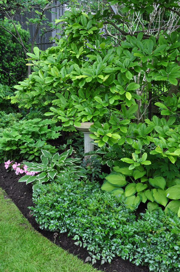 Three Dogs in a Garden: A Bird-Friendly Shade Garden on hosta and daylily garden, hosta and caladium garden, hosta garden plans blueprints, hosta and hydrangea garden,