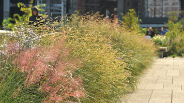 Flores, semillas y colores de otoño en The High Line