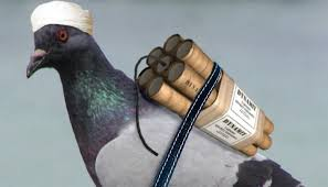 Boko Haram Now Planning To Use Birds As Suicide Bombers