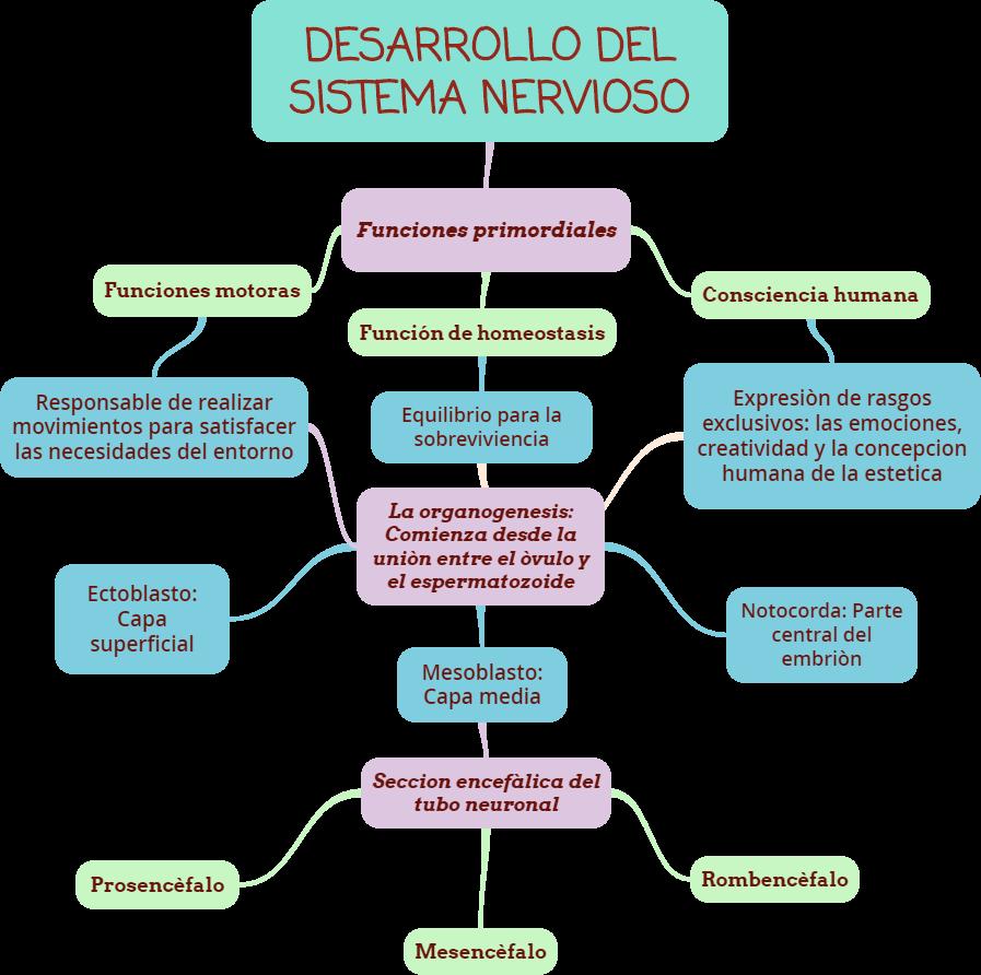 Único El Diagrama Del Sistema Nervioso Componente - Imágenes de ...