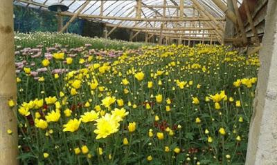 Kebun Bunga Sidomulyo Malang, Tempat Wisata Bunga dan Edukasi Desa Sidomulyo