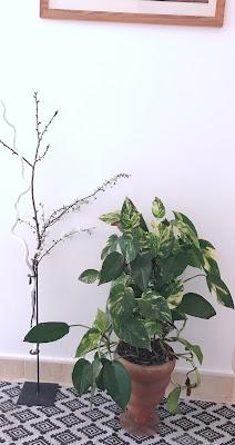 Esta variedad de planta es apropiada para tener en los dormitorios