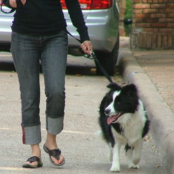 Chronicles Of A Dog Trainer Stop Walking Your Dog,Cheapest City To Buy A House In Arizona