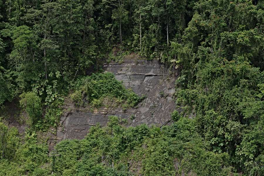 rainforest landslide