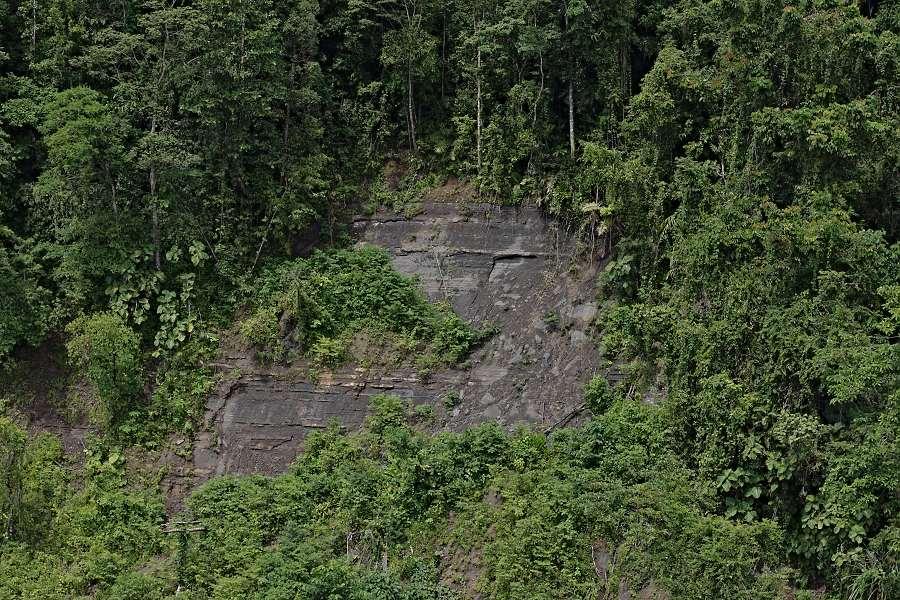 rainforest landslide