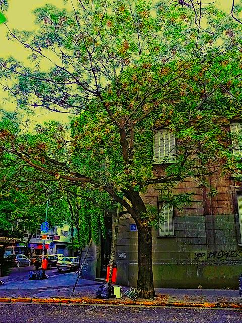 Casa cubierta por enrredadera en esquina de Buenos Aires