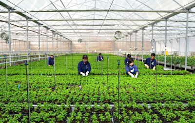 Tuyển nữ trồng rau màu làm việc tại Nhật Bản tháng 4/2016