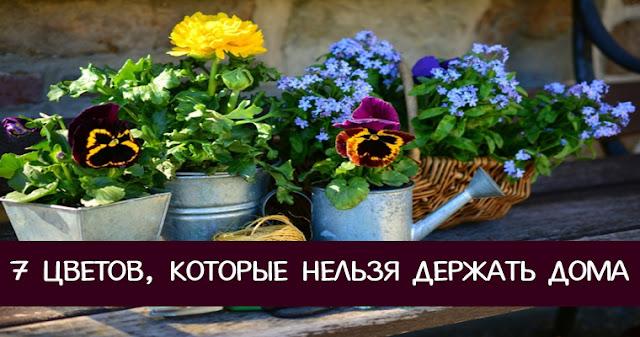 7 цветов , которые нельзя держать дома Фото энергетика Эзотерика спокойствие растения негатив взгляд