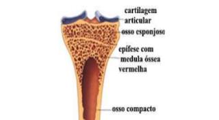 apostila de anatomia veterinaria