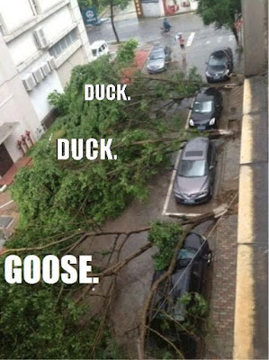 funny car photo, car meme, duck duck goose meme