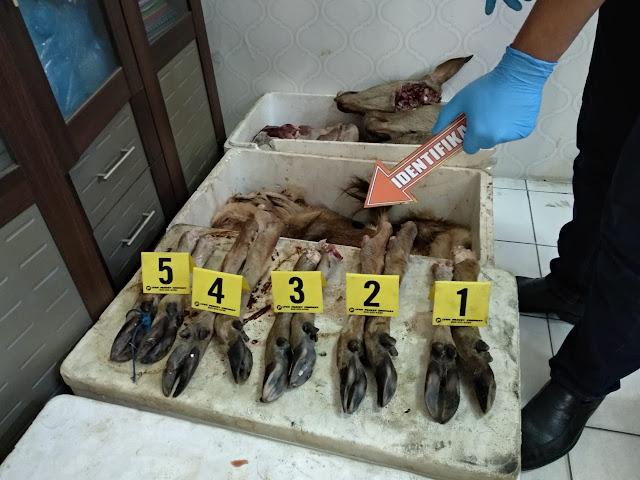 4 Tersangka Pemburuan Satwa Dilindungi,Di Amankan Polda Banten