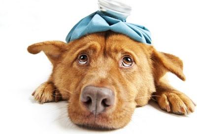 animals  Diarréia em Cães Causas e Tratamentos