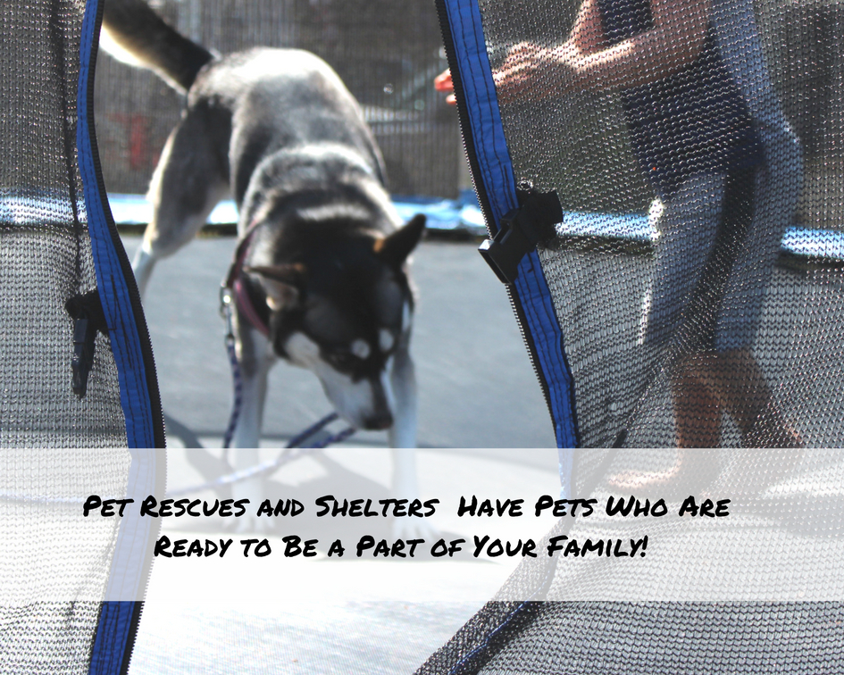 33322903d97eed ... whom we adopted last year from a rescue, jumping on the trampoline with  our kids, which is one of their favorite activities to do in the back yard!