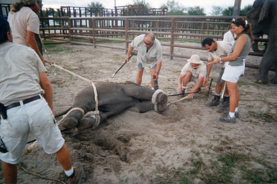 Peta Circus Issues Expert Project