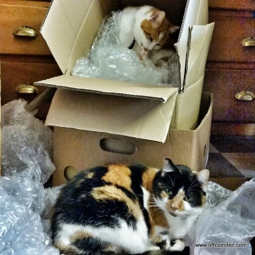 Double-decker cats