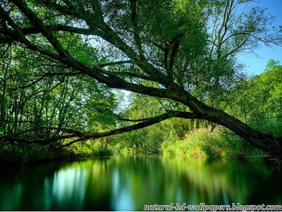 Beautiful Tree on Water, Nice Background