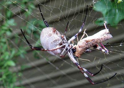 Örümcek-Özellikleri