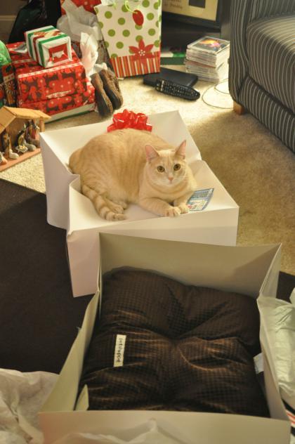 foto de gato durmiendo encima de los regalos de navidad