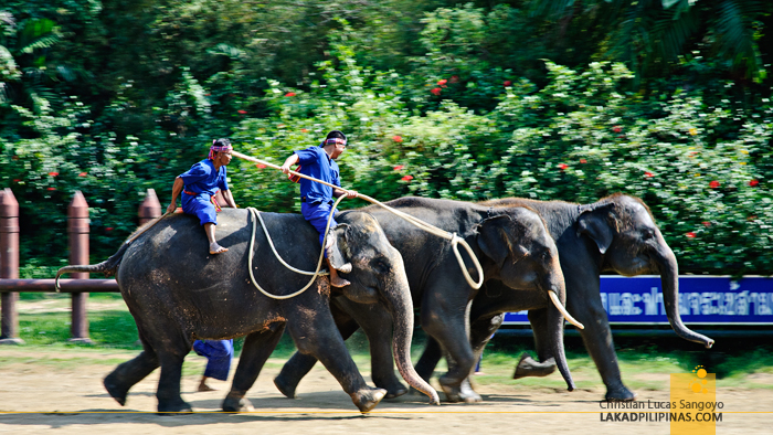 Samphran Elephant Ground & Zoo Elephant Show
