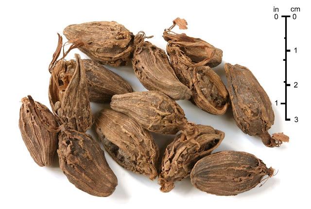 Hột Thảo Quả - Amomum aromaticum - Nguyên liệu làm thuốc Chữa Bệnh Tiêu Hóa