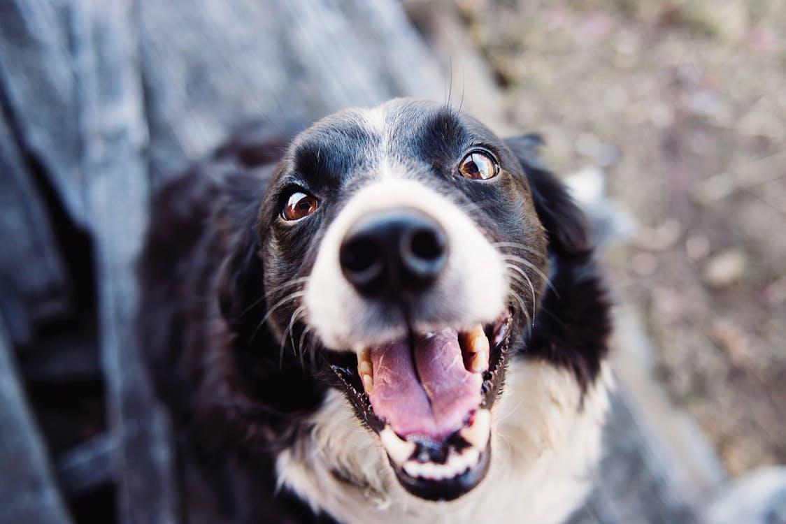 Dog CloseUp-DrCarl