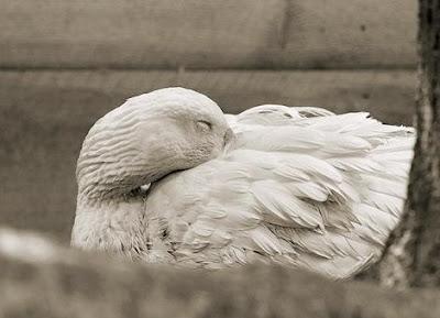 Fotos de animales en la vejez