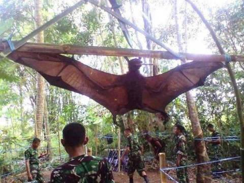 Human Size Bat Caught In Peru / Philippines : Hoax - UFO ...