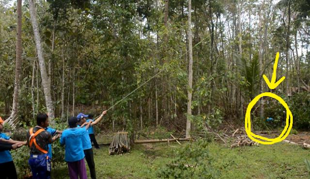 Beginilah 11 Proses Menebang Pohon yang Baik dan juga Savety