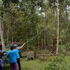Beginilah 11 Proses Menebang Pohon yang Baik dan Savety