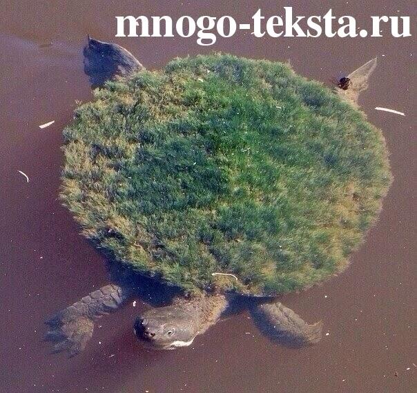 Что означает черепаха, Почему черепаха, Что за слово черепаха, Мультфильм про черепаху